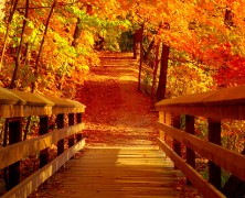 Reasons Two Love Autumn